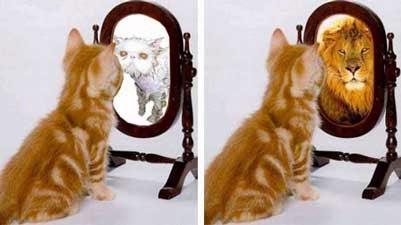 CatAndMirror111 Perception